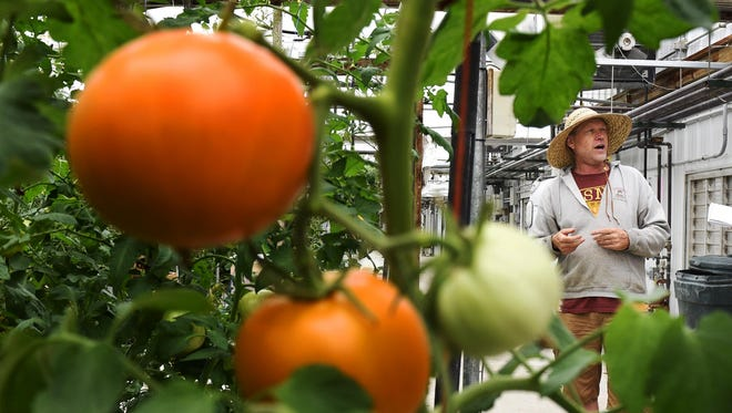Tomato King of Albany owner Jeff Skalicky talks July 1 about the process used to grow several varieties of tomatoes and peppers in one of the farm's greenhouses near Albany.