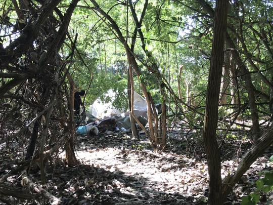There are dozens of tents in the woods behind a shopping plaza in Hamilton.