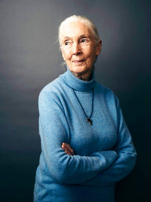 """In this April 7, 2017 photo, British primatologist, ethologist, and anthropologist Jane Goodall poses for a portrait in New York to promote the Disneynature film, """"Born in China."""""""