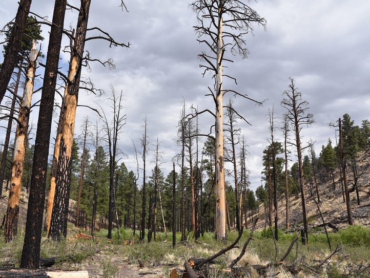 Scars of the 2011 Wallow Fire are plentiful along parts