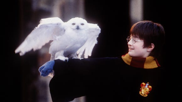 Hedwig, the owl, and Daniel Radcliffe in a scene from