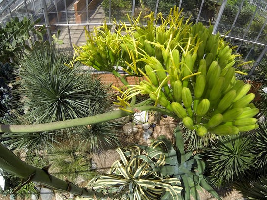 agave plant 2.jpg