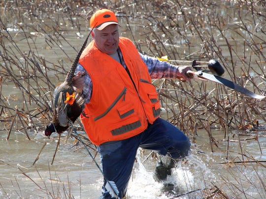 Carl Spaeth, Sr. of Zion, Ill. retrieves a ring-necked pheasant he shot during an archery hunt in Pleasant Prairie, Wis.