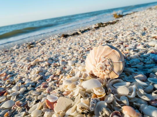Bowman's Beach, located mid-island on Sanibel, offers some of the best shelling in the state.