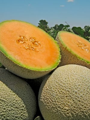 Fresh cantaloupes grown by Dixondale Farms. Cantaloupes and watermelons are experiencing an ideal growing season and high demand as the Fourth of July holiday approaches.