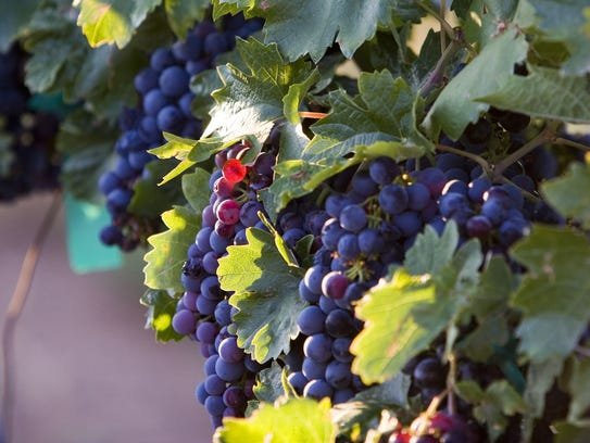 For the Arizona Wine Growers Association / Verde Valley