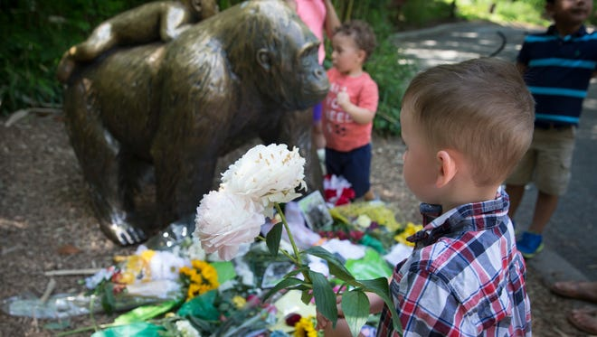 A boy brings flowers to put beside a statue of a gorilla outside the shuttered Gorilla World exhibit at the Cincinnati Zoo & Botanical Garden, Monday, May 30, 2016, in Cincinnati. A gorilla named Harambe was killed by a special zoo response team on Saturday after a 4-year-old boy slipped into an exhibit and it was concluded his life was in danger.