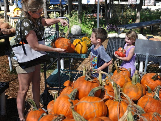 Amanda McWhorter and her children, Easten and Wylee McWhorter, shop for pumkins of all shapes and sizes at the Smith's Farms Pumpkin Patch Monday afternoon.