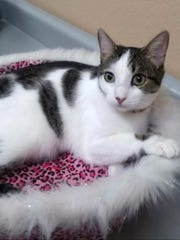 Fayleen is available for adoption at 10807 N. 96th