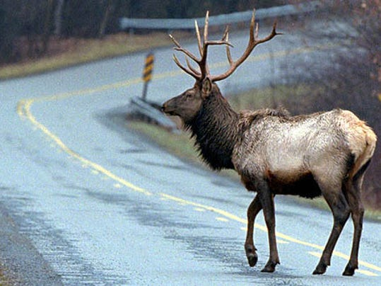 The deadline to apply for a Pennsylvania elk license is July 31.