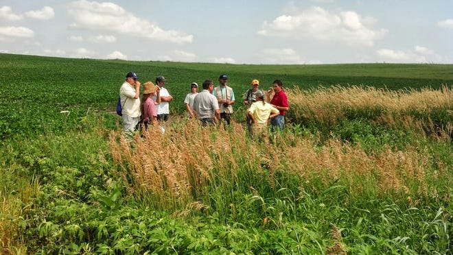 A group of visitors take a look how prairie strips are being used to reduce nutrients from leaving the field near the Neal Smith National Wildlife Refuge.