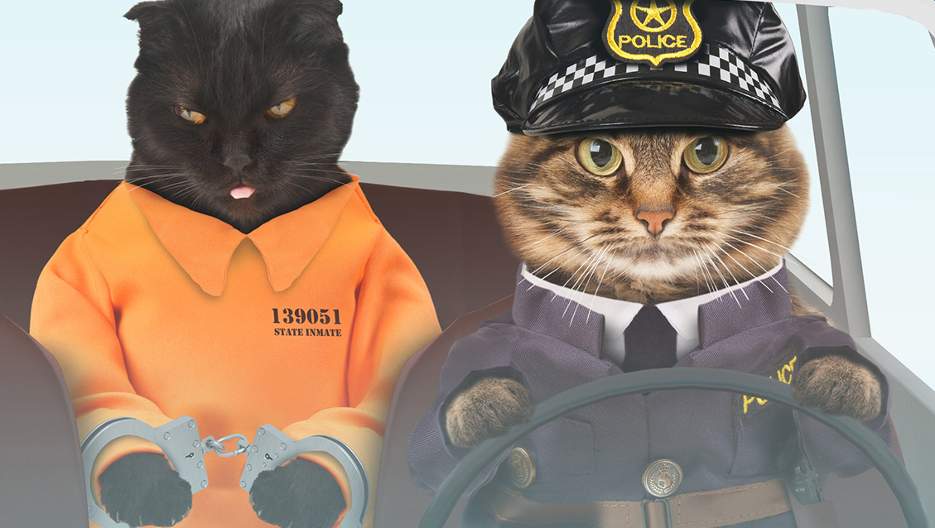 Police cat on way after Michigan department exceeds ...