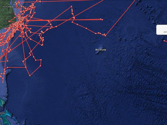 Great white shark Katharine track.