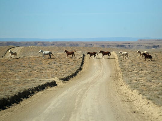 A herd of horses cross Indian Service Road 3050 on Monday, Feb., 26, 2018 in Shiprock.