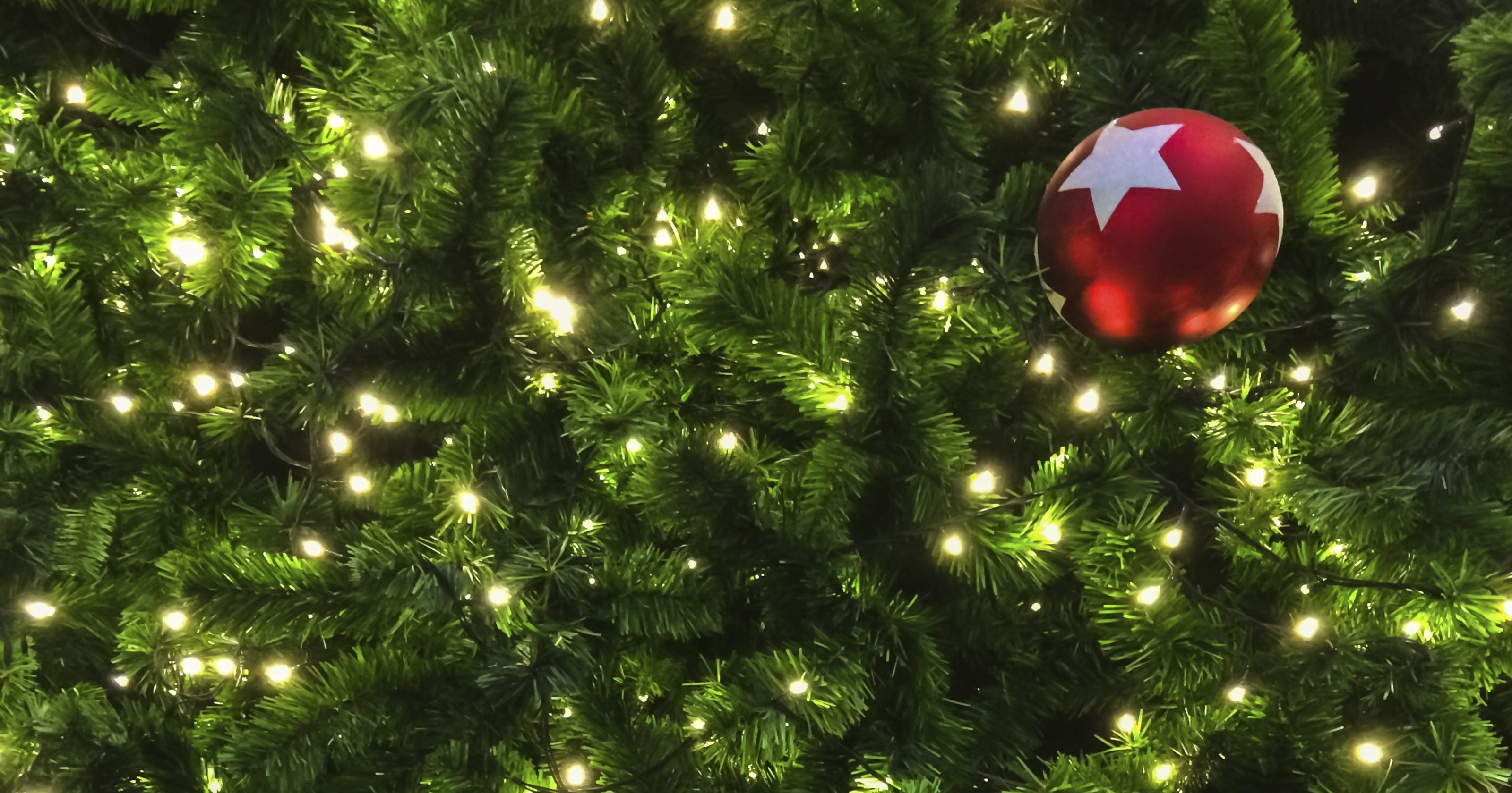 schumer urges usps to waive shipping restrictions on christmas trees - Usps Delivery Christmas Eve