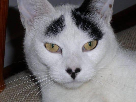 Mug_Cat Truskot