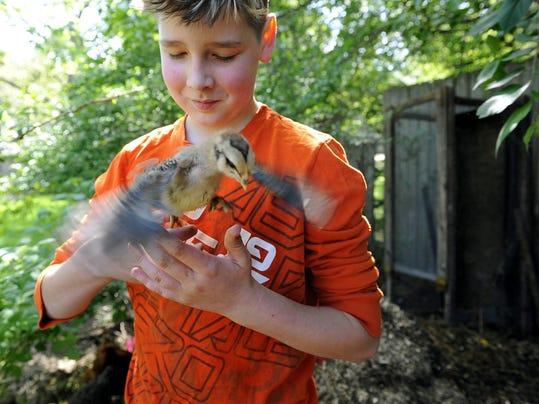 backyard_chickens_lansing_5