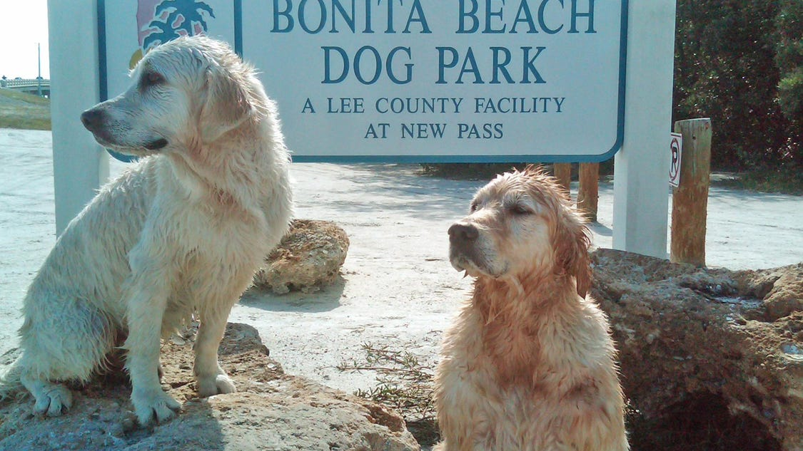 Is Fort Myers Beach Dog Friendly