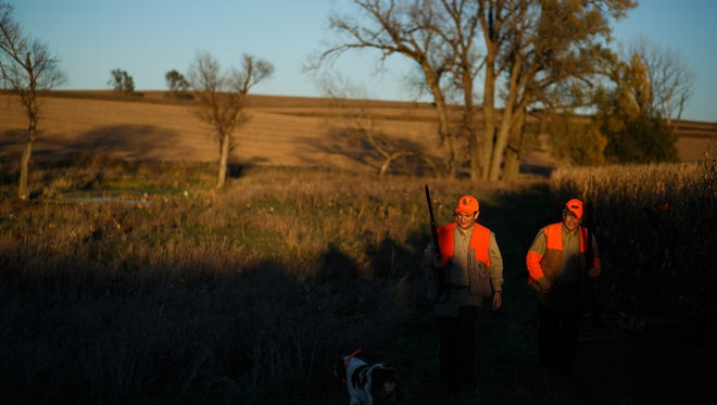 Republican presidential candidate Ted Cruz, left, and Congressman Steve King, right, walk through the field during the Col. Bud Day Pheasant Hunt at The Hole N the Wall Lodge on Saturday, October 31, 2015 in Akron, Iowa.