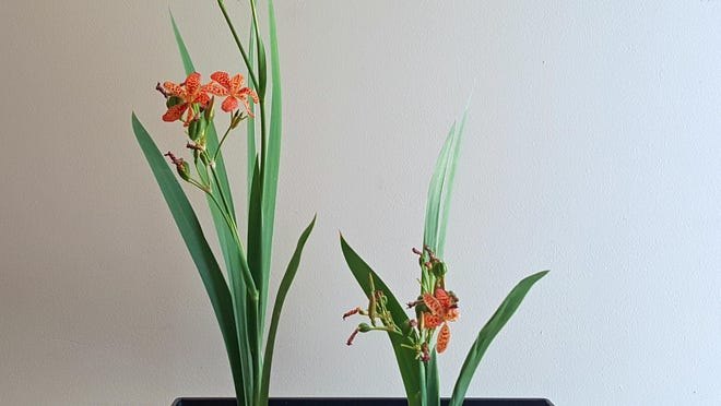 While Western floral design typically emphasizes flowers and color, ikebana tends to be more minimalistic, focusing on the sculptural lines, proportions and shape of the arrangement.