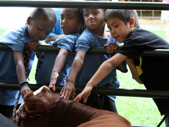 Opening day at the 2014 Somerset County 4-H Fair being held at North Branch Park in Bridgewater. Children reach out to touch cattle in the 4-H Beef Tent.