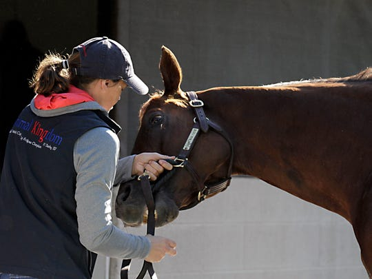 Assistant trainer Alice Clapham plays with Kentucky Derby hopeful Irish War Cry, the first horse bred in New Jersey to run in the race since 1992.