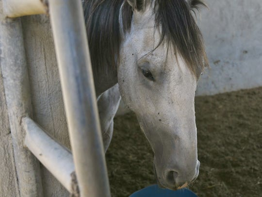 Along with dissembled vehicles, two malnourished horses