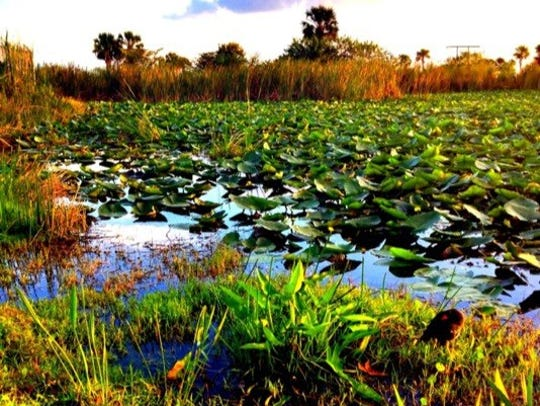 Flora and fauna abound in the Florida Everglades.