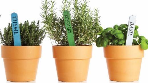 Growing fresh herbs year-round