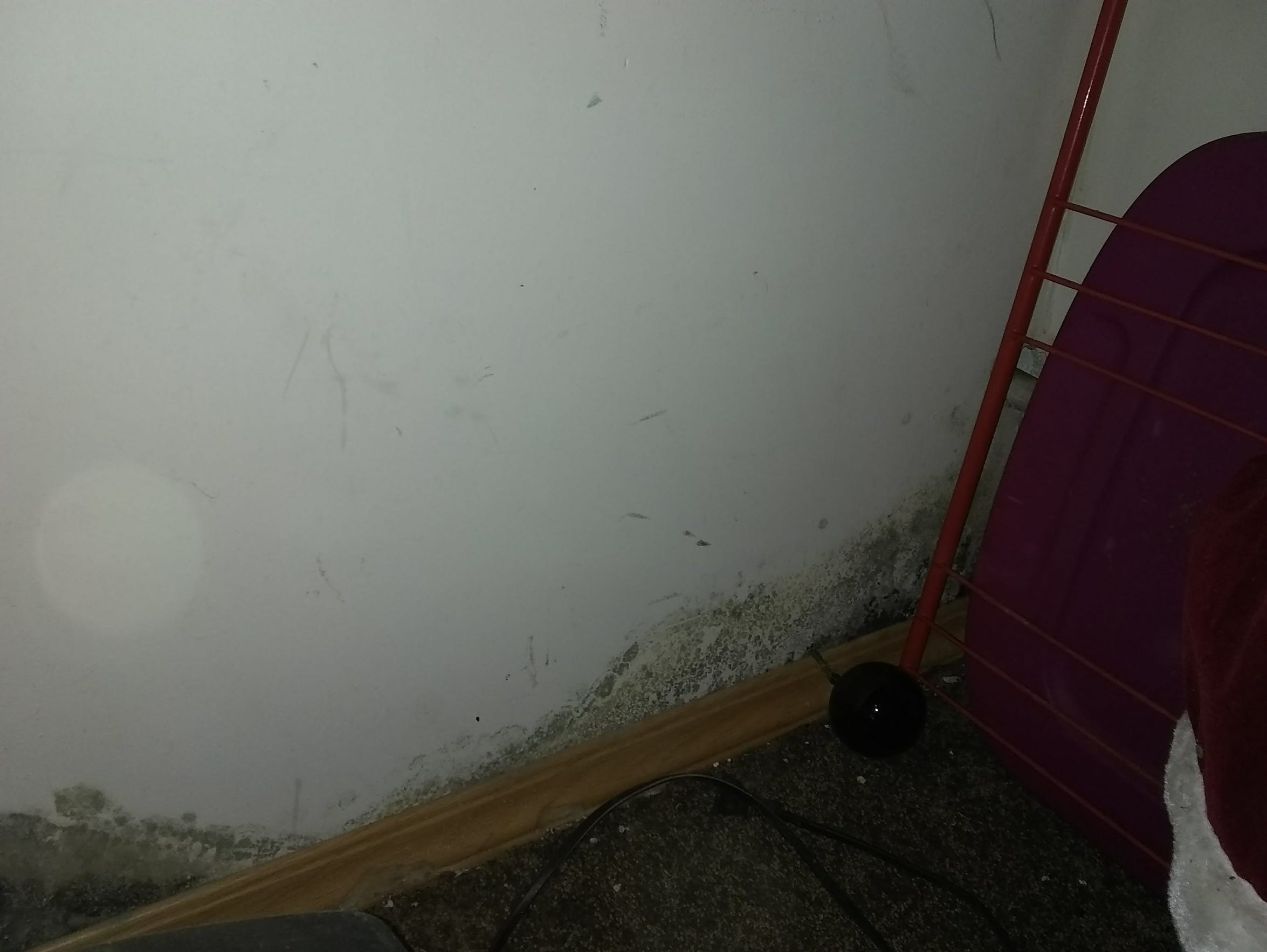 A photo of mold in the Fields' home at 138 Julia Lane,