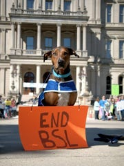 A member of Rock N Roll K9's Performance Team participates in a rally against breed discrimination.