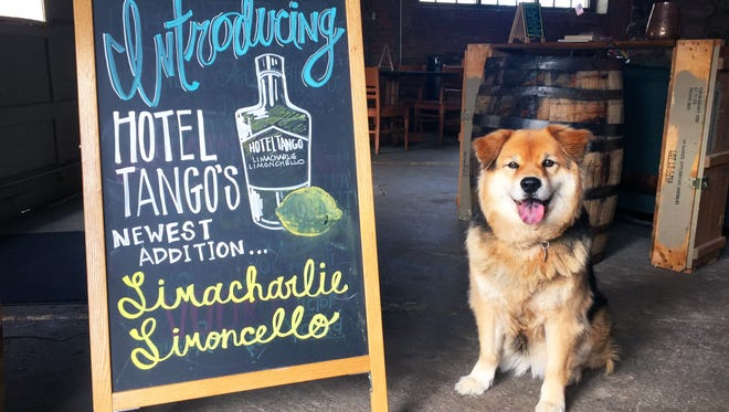 Snickers, owned by Indianapolis Star beverage reporter Amy Haneline, poses for a photo at Hotel Tango Whiskey in Fletcher Place.