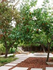 contemporary_peach tree