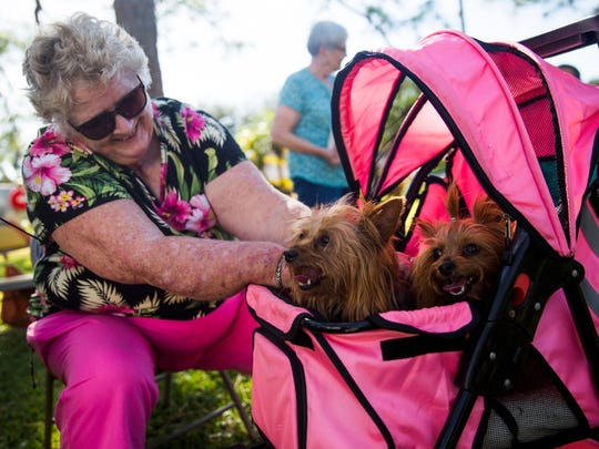 Lorraine Souchuk adjusts Yorkshire terriers, Muffy and Gidget, in a stroller during a special St. Francis Blessing of the Animals service on Saturday, November 26, 2016 at St. PaulÕs Episcopal Church in East Naples. The church invited the community to bring pets of all types for a special blessing in observance of St. Francis Day.