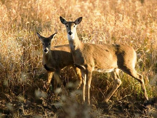 Deer hunters in 25 Missouri counties will have to have their deer tested for CWD.