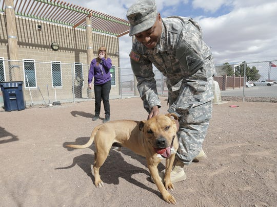 Sgt. Byron Todd gets to know a dog at El Paso Animal