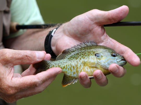 The Greater Cincinnati Fly Fishing Show is coming up soon.