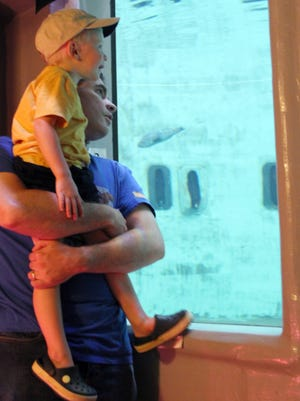 Visitors peer through the glass at the aquarium in the James J. Howard Marine Sciences Laboratory during the 10th Annual Ocean Fun Days in 2013 on Sandy Hook.