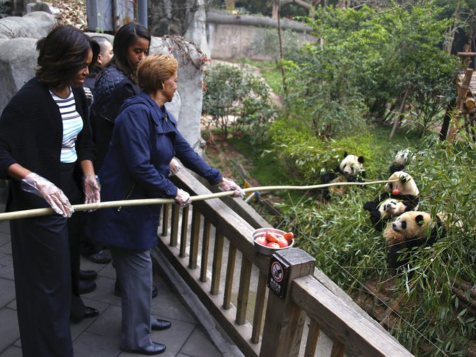 The first lady and her mother, Marian Robinson, use a feeding pole to feed apples to giant pandas at the panda research facility as Malia and Sasha watch. The Obamas spent 15 minutes observing LiLi, a 22-year-old grandmother and five young pandas, and also got to see the panda nursery, according to the pool report.