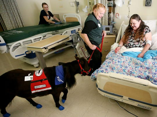 Virginia Abdalla, right, is all smiles as Eileen Watland leads miniature horse Diesel over to the side of her bed for a visit in September at Harrison Medical Center in Bremerton.