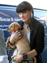 "Abby (Pauley Perrette) uncovers new information about her family after undergoing tests for a kidney donation in the 2011 ""Enemy on a Hill"" episode of ""NCIS,"" (Photo: Sonja Flemming/CBS)"
