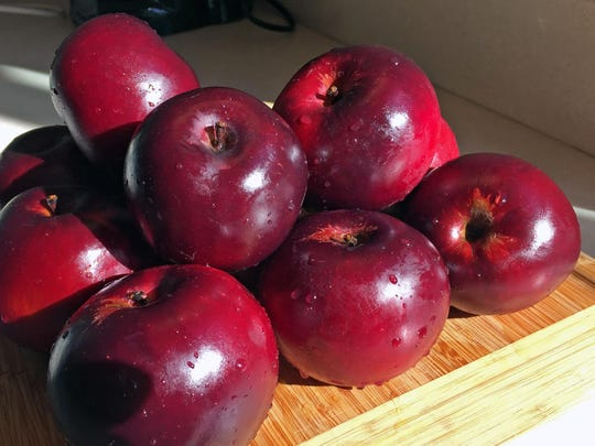 Arkansas black apples are noted for their full flavor and ability to stay firm for weeks after harvesting.