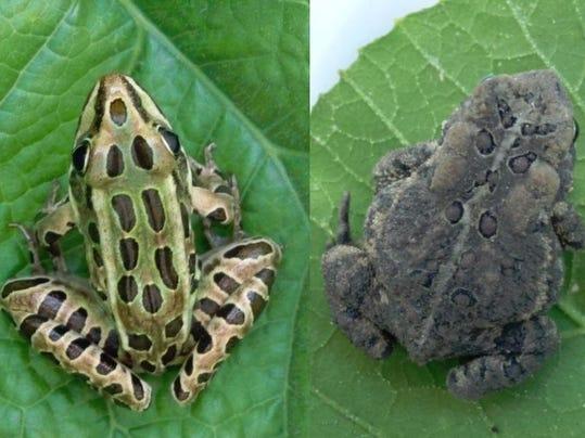 Amphibians 2jpg