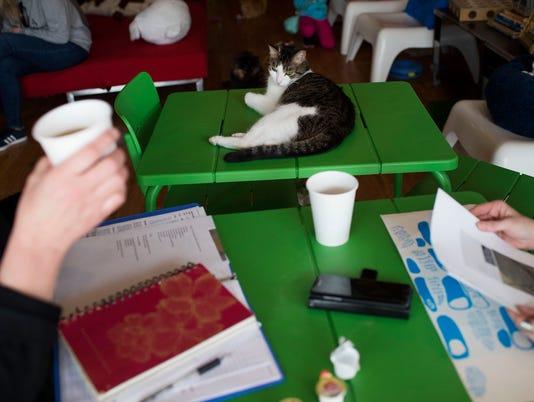 636259900357222838-Catfe-cat-ferndale-adopt-13.JPG