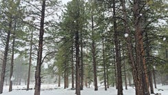 Snow falls 15 miles west of Flagstaff Friday.