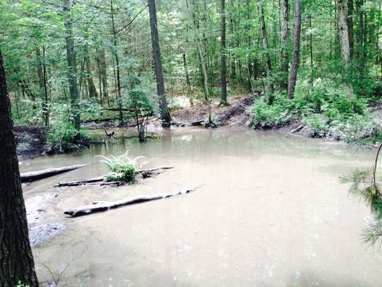 An established all-terrain-vehicle trail goes through this vernal pond on a tributary of Mountain Creek in Michaux State Forest.