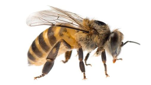 A letter is regarding the report that Appleton officials have supported residential beekeeping.
