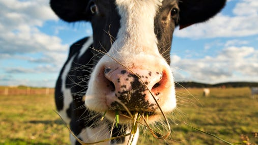 A dairy herd in Dane County has tested positive for bovine tuberculosis.