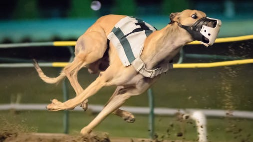The Florida Supreme Court has unanimously agreed to take up a battle about whether a proposed ban on greyhound racing should go on the November ballot.