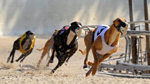 Greyhound dog racing, Fort Myers.